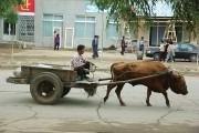 北朝鮮で牛は食用ではなく輸送や農業に使われている。