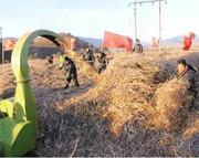 北朝鮮の農場