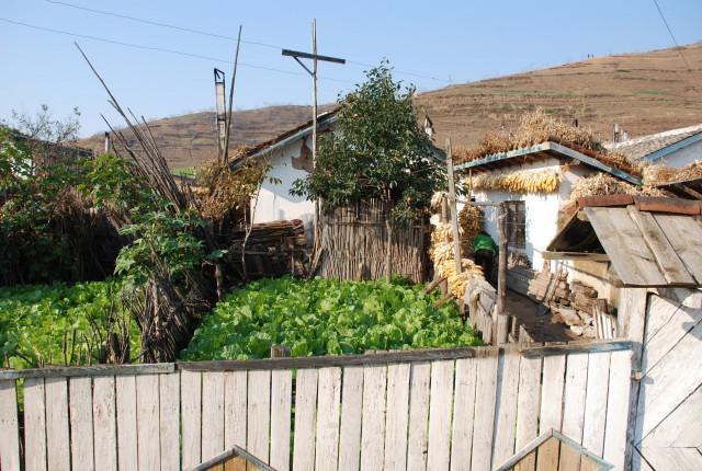 北朝鮮の農家(本文とは関係ありません) ©EC DG ECHO
