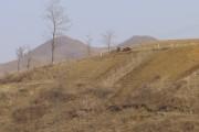 中朝国境国境を流れる鴨緑江の堤防も個人耕作地になっている。