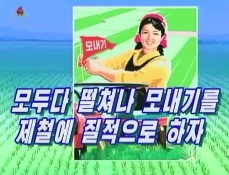 田植え戦闘の時期にテレビでよく流される標語「皆立ち上がり田植えを適期に質良く行おう」(画像:朝鮮中央テレビキャプチャー)