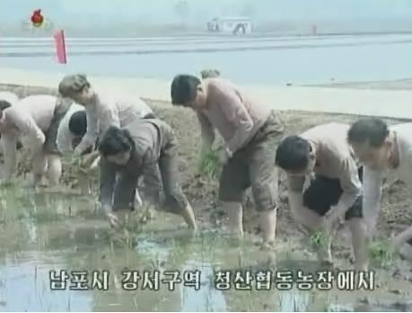 平安南道南浦市江西区域にある青山協同農場での「田植え戦闘」(画像:朝鮮中央テレビキャプチャー)