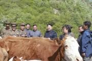 20150511労働新聞牛牧場05