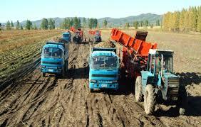 大紅湍の大規模ジャガイモ農場(画像:労働新聞キャプチャー)