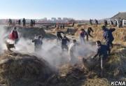 平壌郊外にある朝鮮キューバ親善ファソン野菜温室農場での堆肥戦闘(画像:朝鮮中央通信)