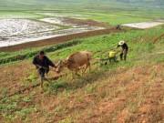 北朝鮮で耕作が行われている様子