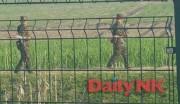 北朝鮮・新義州市の田植え戦闘の様子(撮影:デイリーNK取材班)