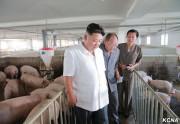 大同江養豚工場を現地指導した金正恩氏(2016年8月18日付労働新聞より)