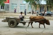 北朝鮮の牛車(画像:デイリーNK)