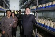 平壌キノコ工場を現地指導した金正恩氏(2017年4月8日付労働新聞より)