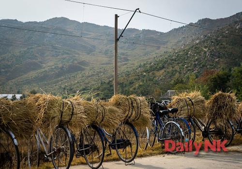 最近平安北道の農村で撮影された、自転車でわらを運ぶ光景(画像:デイリーNKカン・ミジン記者)