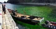 2014年8月31日、北朝鮮の清津(チョンジン)港を出発してイカ漁を行い、9月2日に機関故障を起こし、5日間にわたり漂流していた0.8t級の北朝鮮漁船。同7日午前、韓国慶尚北道地方警察庁所属の独島警備隊に発見され曳航された(写真:独島管理事務所提供/ニューシスKOREA)