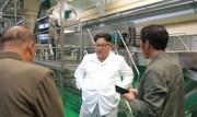 三池淵ジャガイモ粉生産工場を現地指導した金正恩氏(2018年7月10日付朝鮮中央通信より)