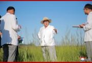 咸鏡北道鏡城郡温堡温室農場の建設準備を現地指導する金正恩氏(2018年8月18日付朝鮮中央通信)