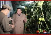 農場と育苗場の建設場を現地指導した金正恩氏(2019年10月18日付朝鮮中央通信)