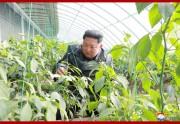 仲坪野菜温室農場の操業式に参加した金正恩氏(2019年12月4日付朝鮮中央通信より)