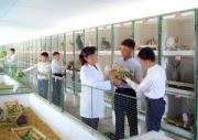ウサギの飼育を奨励している北朝鮮(朝鮮の今日)